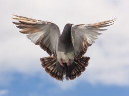 HTTPS на примере почтовых голубей
