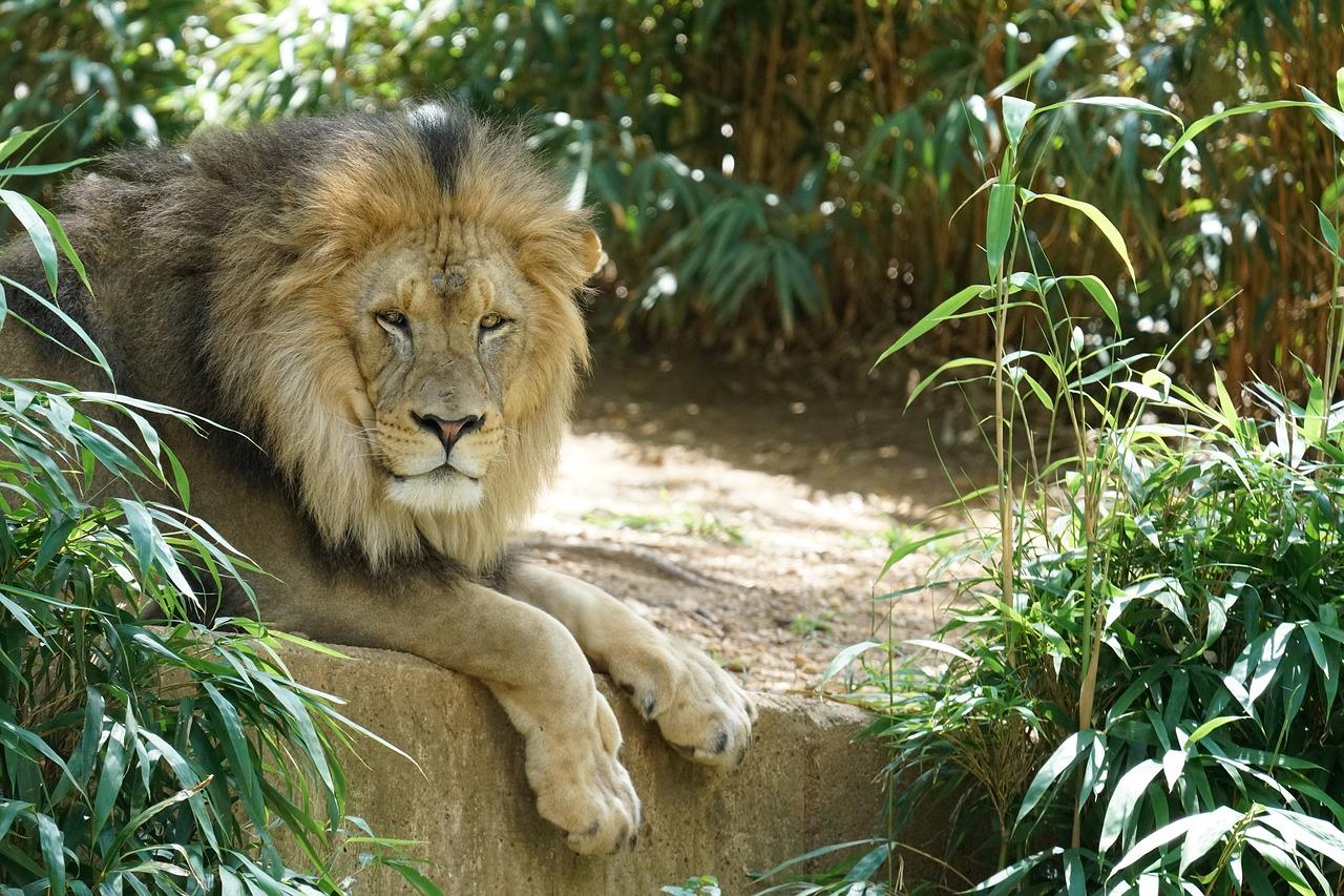 Хронотип львов