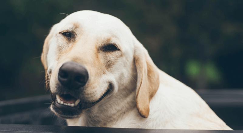 Нап ервой картинке распознается собака