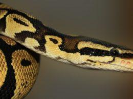 Вопросы на собеседованиях по Python