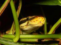Коротко о языке программирования Python