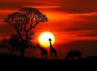 Почему язык 1С обречен на вымирание