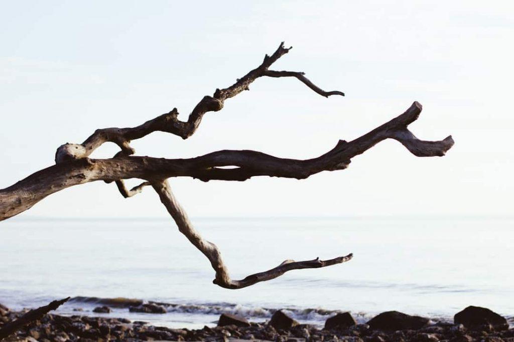 Создание branch